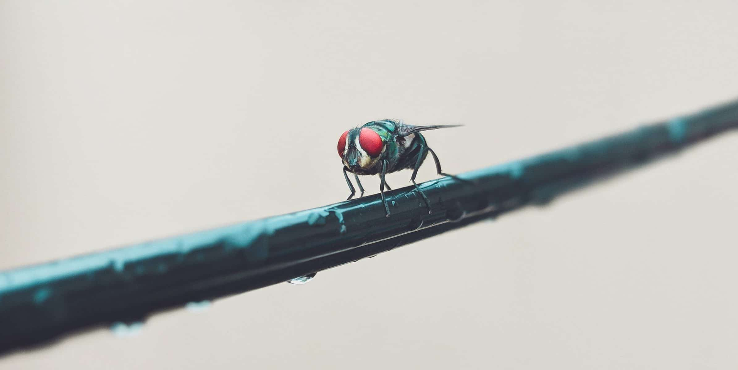 Une mouche posée sur une tige, pose la question de la durée de vie avec humour.