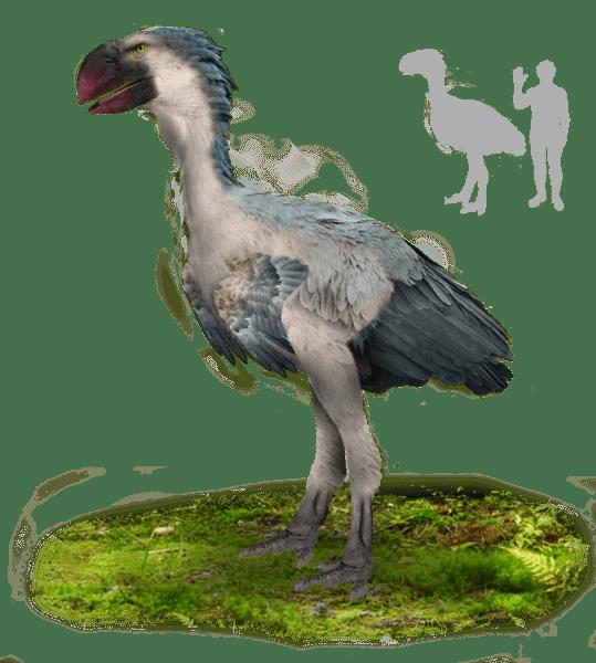 Dessin d'un gastornis, oiseau prédateur préhistorique, très dangereux et impressionnant.