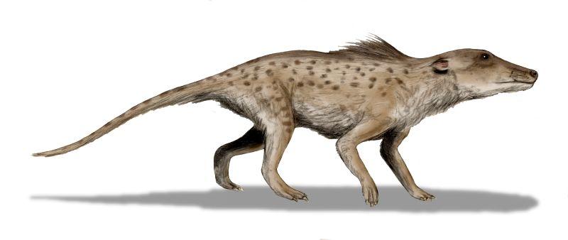 Illustration d'artiste du pakicetus inachus, artiodactyle à 4 pattes ancêtre de la baleine.