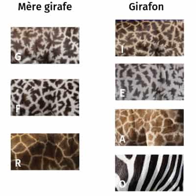 Jeu pour retrouver le girafon et sa mère avec une photo de zèbre.