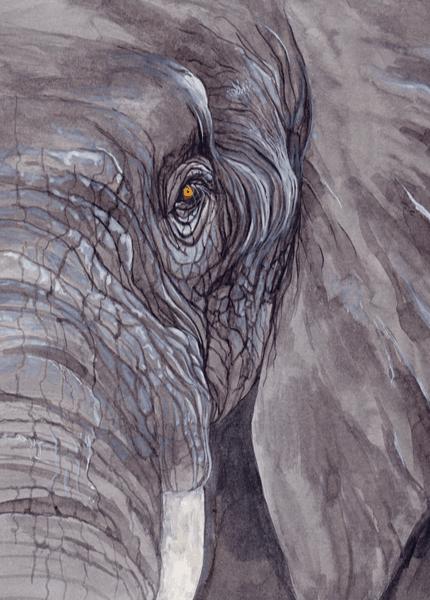 Illustration d'un éléphant de Julie Terrazoni, tiré de l'atlas de zoologie poétique.